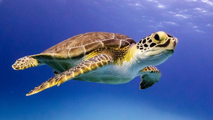 Turtle poachers arrested during drug bust